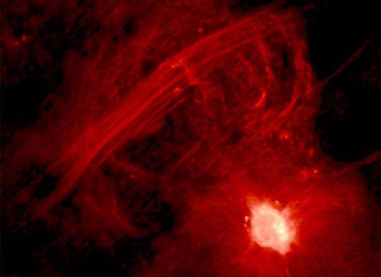 Η Κεντρική Γαλαξιακή Αψίδα