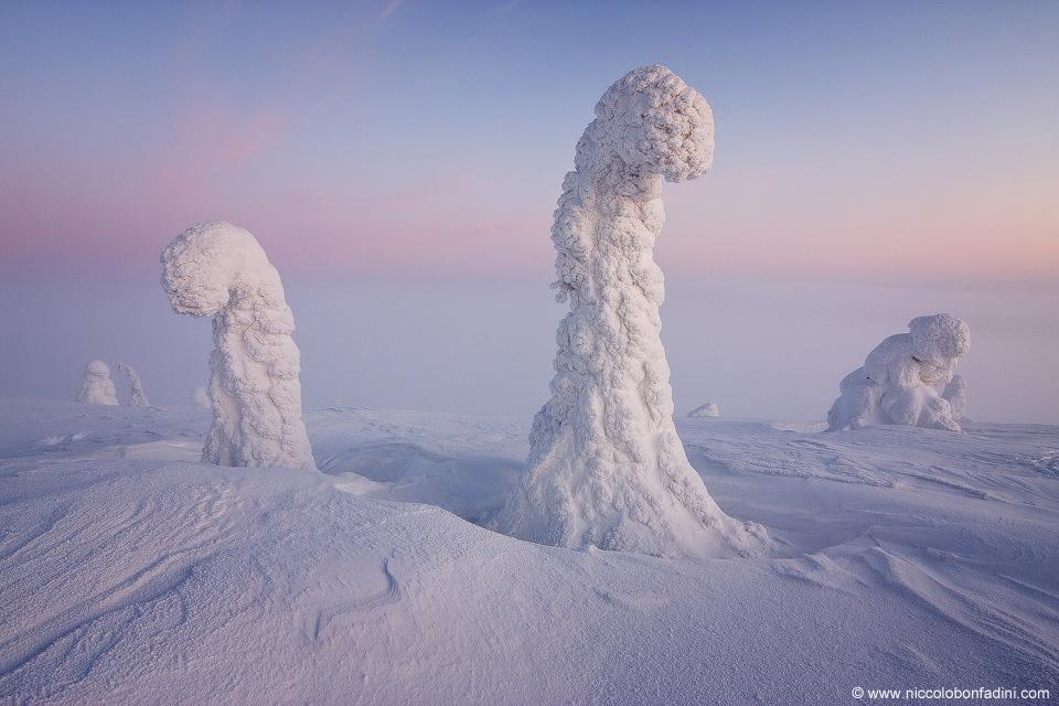 Φρουροί της Αρκτικής