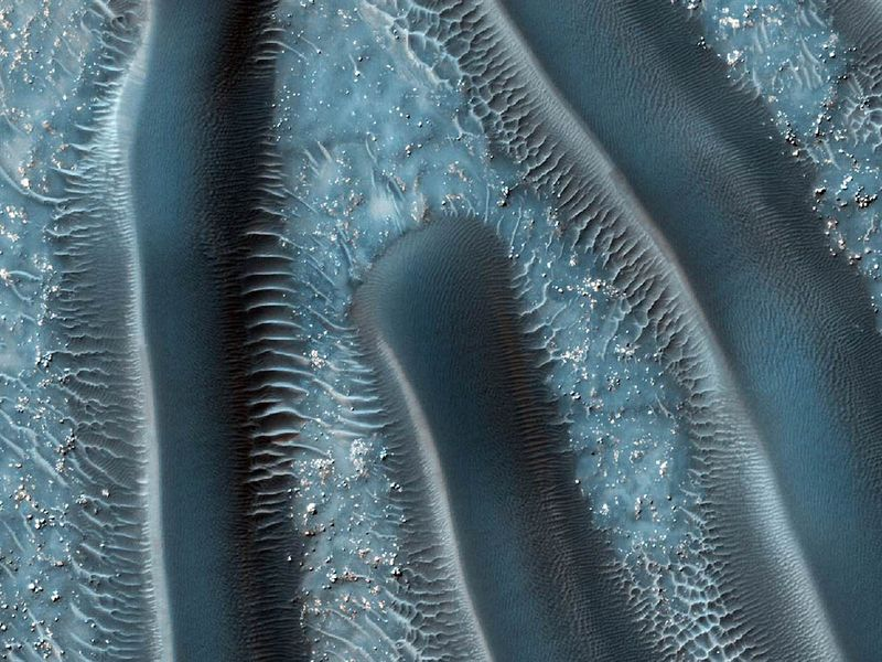 Αρειανοί millipedes